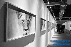 首届中国(三门峡)白天鹅・野生动物国际摄影展开幕
